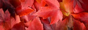 leafautomne